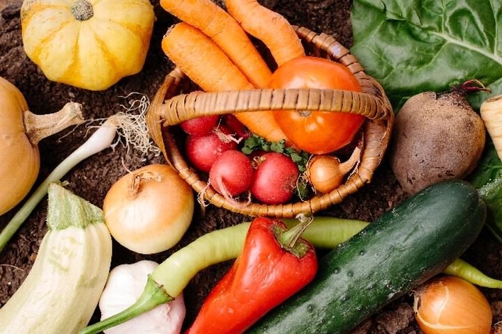 様々な野菜の画像