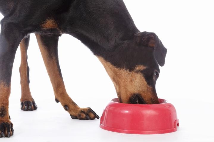 総合栄養食のドッグフードを食べる犬