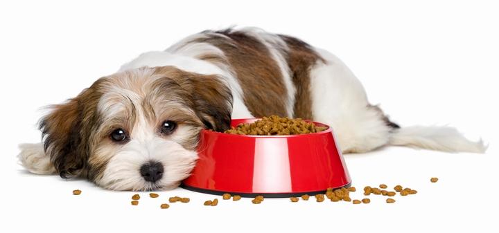 粗悪なドッグフードを食べない犬