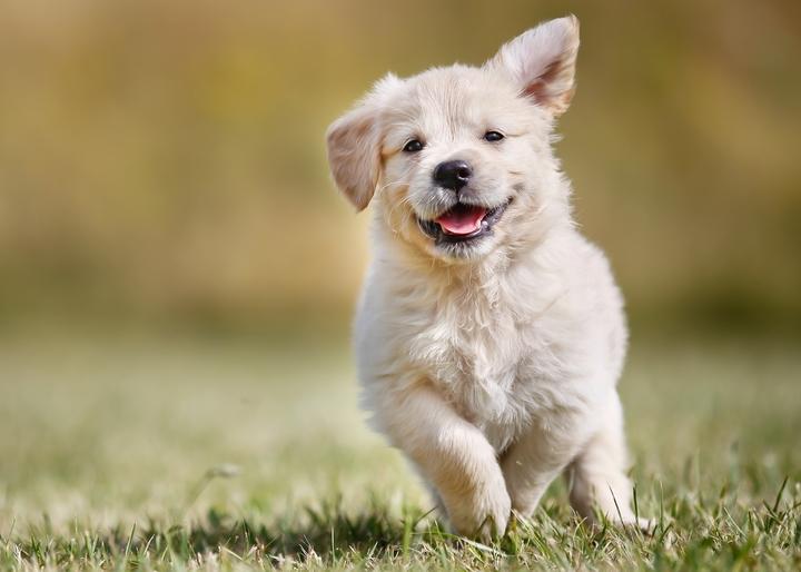 関節に負担をかけないように適度な運動をしている子犬