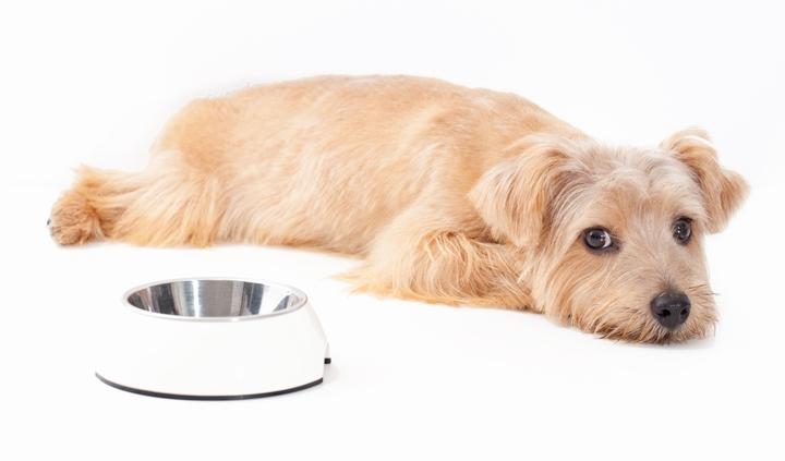 ドッグフードを食べずに寝転んでいる犬の様子
