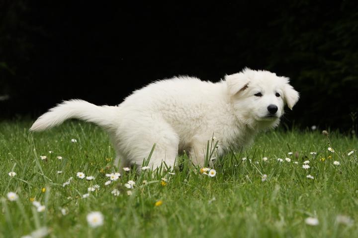 草むらでうんちをしながらこちらを気にする子犬