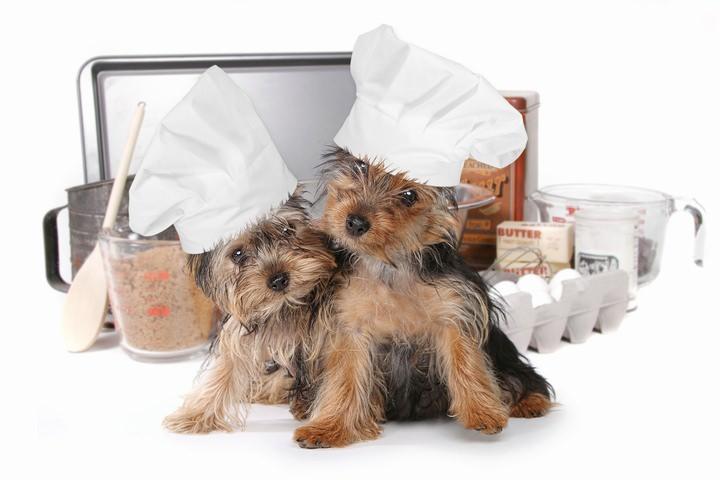 コックさんの格好をして料理をする犬