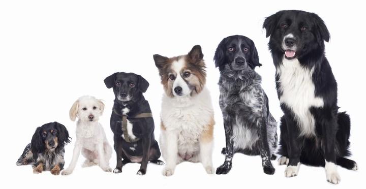 様々な大きさの犬