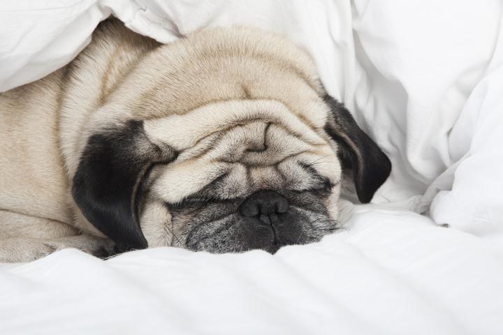 犬の肥満のリスク