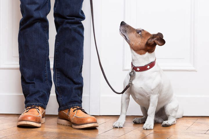 リードを装着して飼い主を見つめる犬