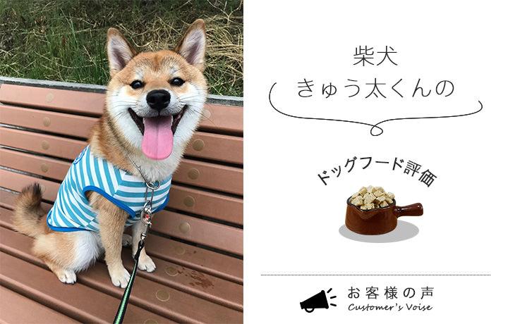 ドッグフードの評価をする柴犬のきゅう太くんが笑っている様子