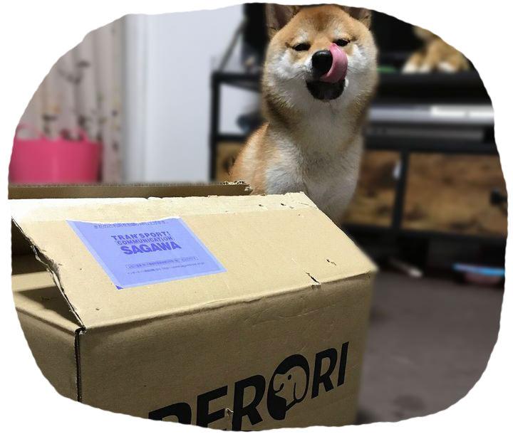 大好きなドッグフードの箱を目の前に嬉しそうにする柴犬のきゅう太くん