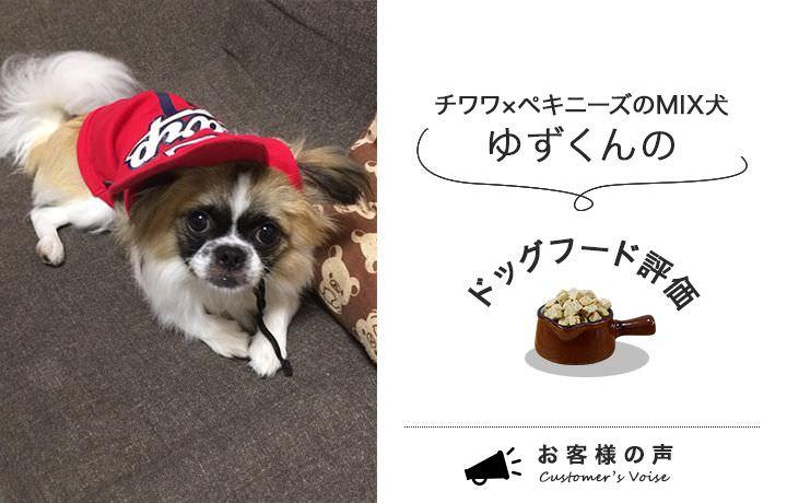 チワワ×ペキニーズのMIX犬、ゆずくんのドッグフード評価