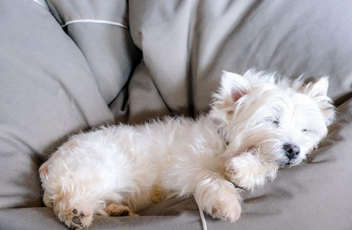 気持ちよさそうに眠るテリア犬