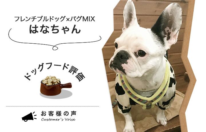 国産のドッグフードの評価をしてくれたフレンチブルドッグとパグのミックス犬はなちゃん