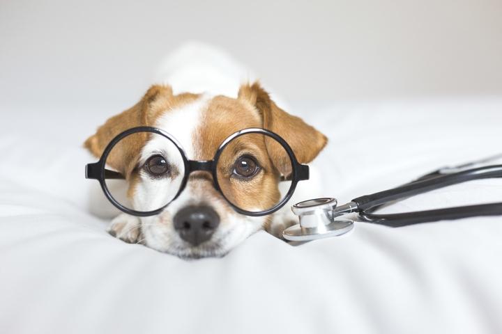 犬のてんかんの治療について説明している犬