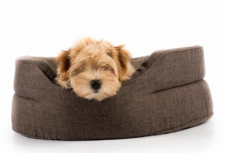 ベッドでくつろいでいる犬の様子
