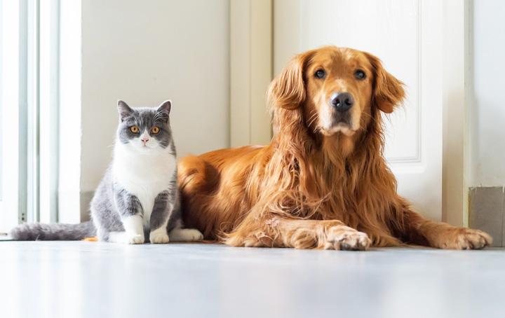 仲良しなゴールデンレトリーバーと猫が並んで座っている様子
