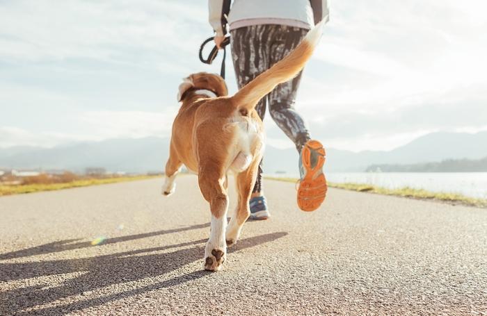 犬と楽しそうに散歩をしている様子